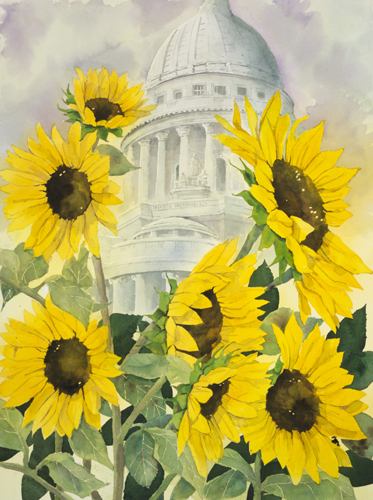 Sunflowers Madison Capitol
